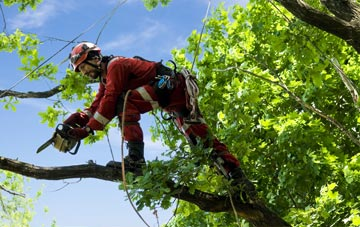 find trusted rated City Of London tree surgeons