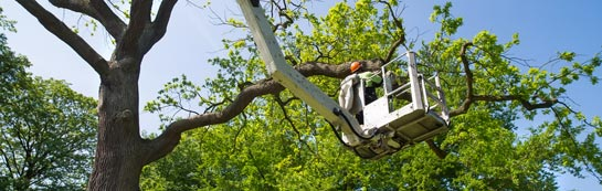 City Of London tree surgery services