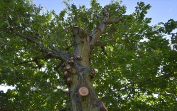 what is City Of London tree surgery?